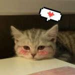 @catnip