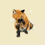 @red-fox-kai