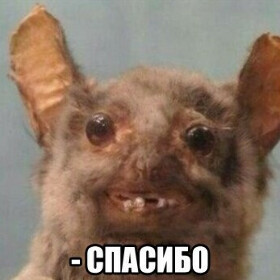 daryagoncharova1