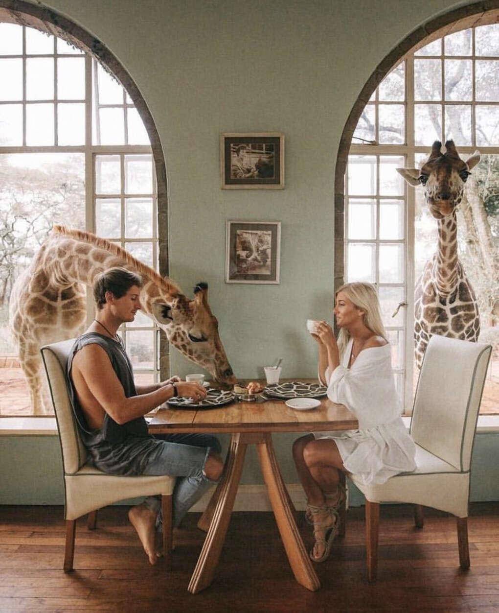 Позавтракать с жирафами в отеле Giraffe Minor (Кения)