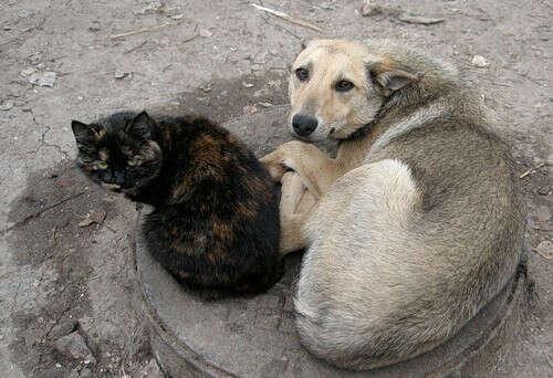 Хочу, чтобы все бездомные животные обрели любящих хозяев!