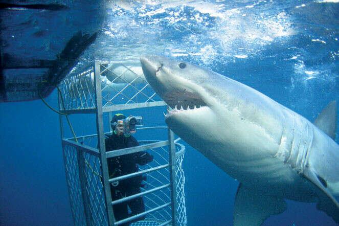 Поплавать с акулами