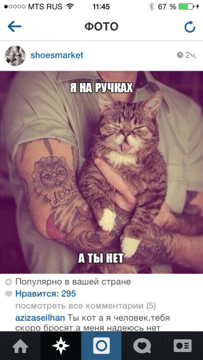 Хочу шикарного котика