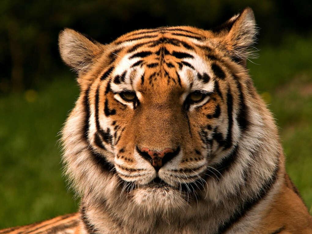 Спасти вымирающих животных