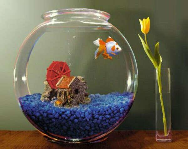 Круглый аквариум с рыбками