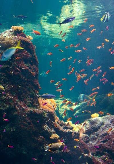 Поплавать с аквалангом
