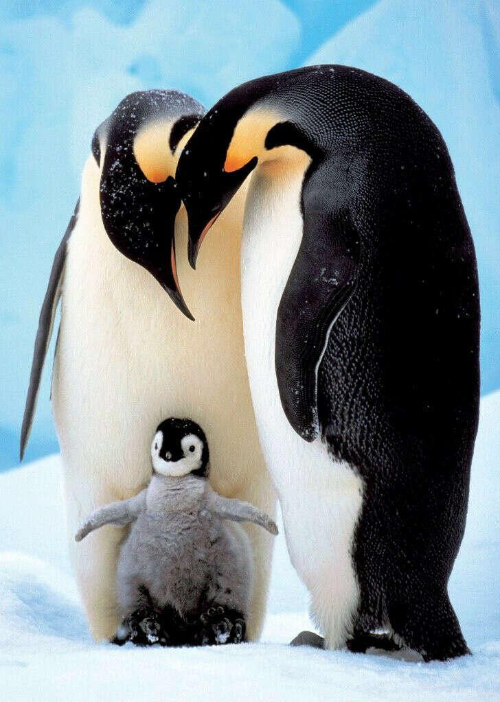 Увидеть пингвина