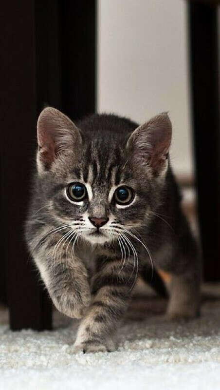 Котика:3