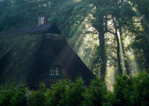 Пожить в домике в лесу