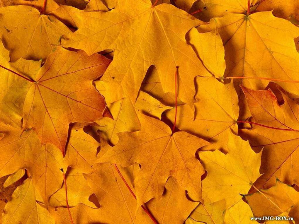Поваляться в опавшей листве)