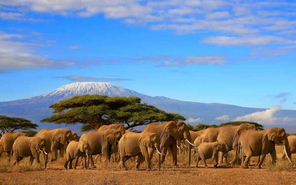Поехать в Кению