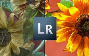Lightroom. Основы / Онлайн-фотошкола