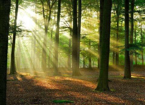 Фотообои Солнечный рассвет в лесу №4575. Каталог природных пейзажей KLV-обои