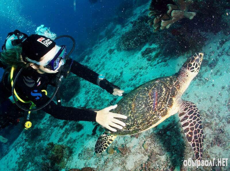 Поплавать с черепахой