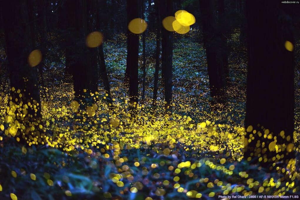 Увидеть светлячков
