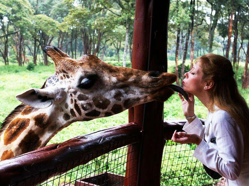 Покормить жирафа