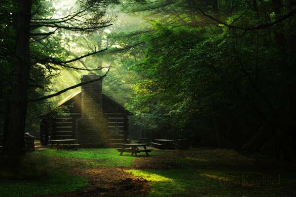 Пожить в лесу без людей и интернета