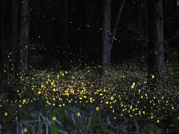 увидеть множество светлячков