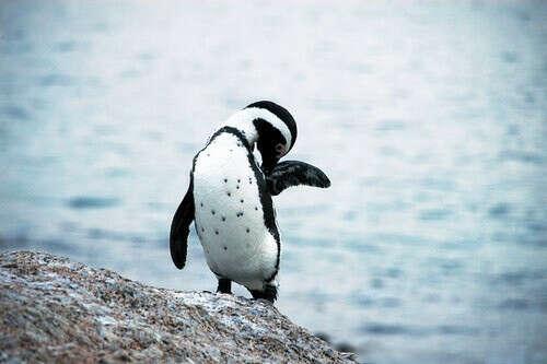 Увидеть настоящих пингвинов :)