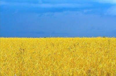 Хочу счастья Украине!