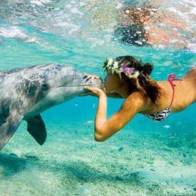 Поплавать с дельфином