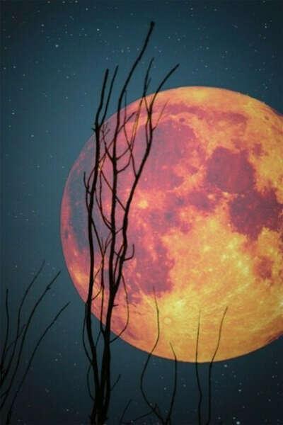Увидеть полную луну!