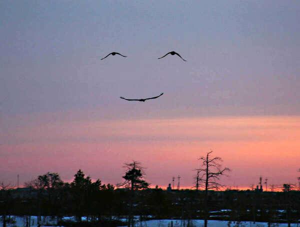 позитивных эмоций