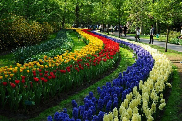 Посетить Парк Кёкенхоф во время цветения тюльпанов