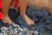 Давить виноград ногами для вина