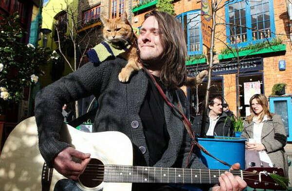 Послушать вживую игру на гитаре Джеймса Боуэна и погладить кота Боба