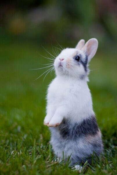 Хочу домашнего кролика :3
