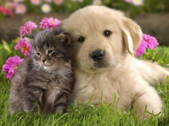 хочу чтобы у каждого животного был дом