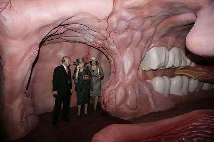 посетить музей человеческого тела в Нидерландах