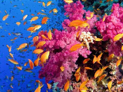увидеть коралловый риф