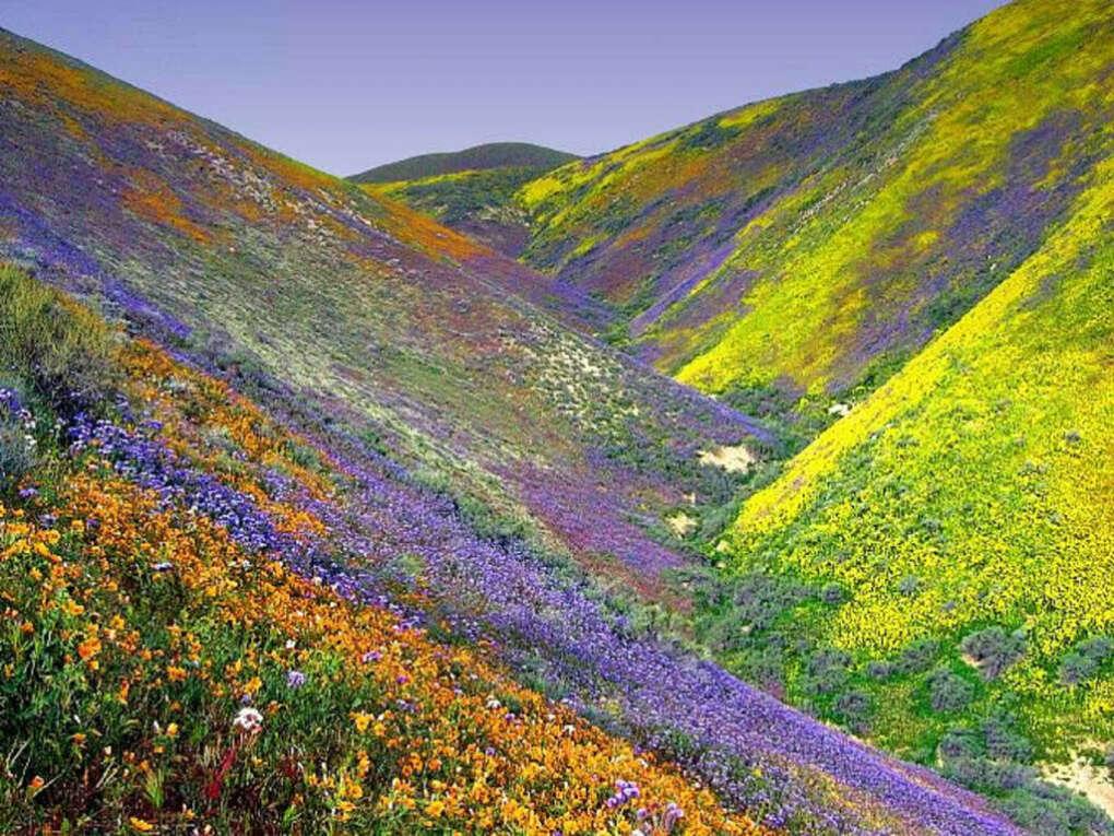 Посетить долину цветов