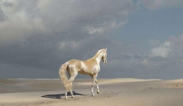 Покататься верхом на лошади