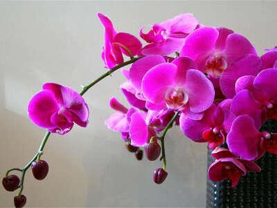 Разводить орхидеи