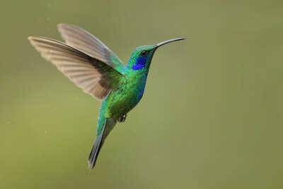 Покормить колибри