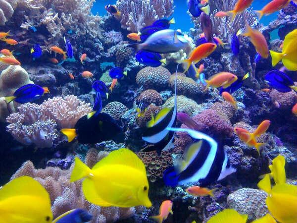 Сходить всей семьей в океанариум