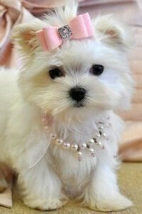 Хочу собачку