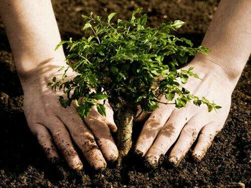 Посадить 10 деревьев