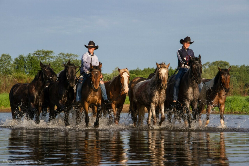 Аренда лошади | Прокат лошадей в Подмосковье на ранчо Аванпост