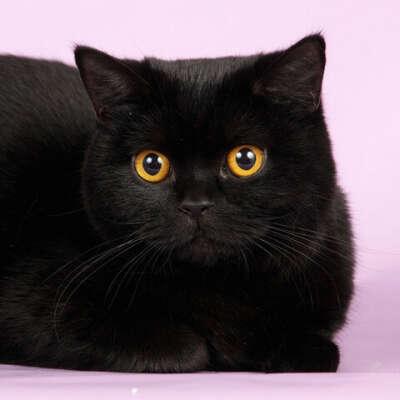 Черный кот с апельсиновыми глазками