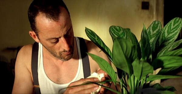 Получать вместо букетов цветы в горшках