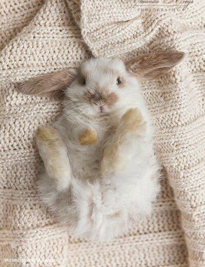 Хочу погладить кролика