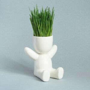 """Набор для выращивания """"Травянчик"""""""