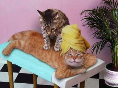 10 сеансов массажа
