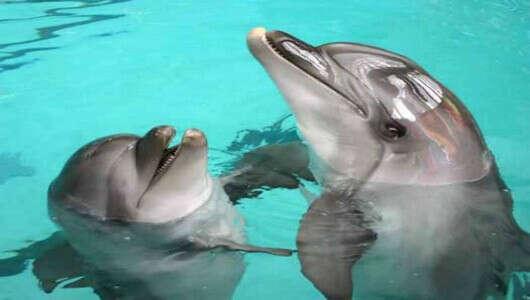 Поплавать с дельфинами!:)