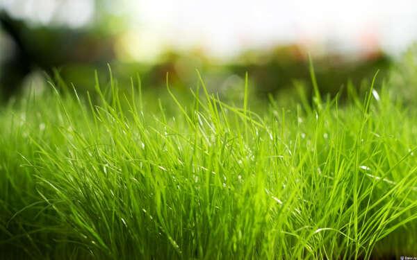 Прогуляться босиком по траве
