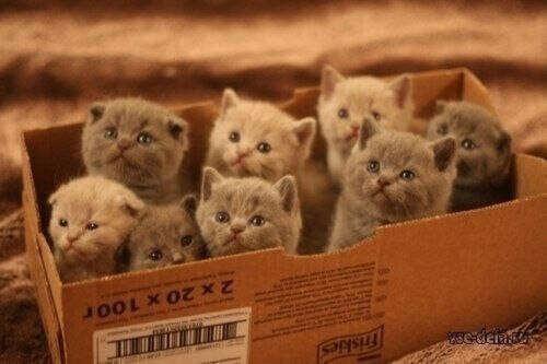 Я хочу коробку счастья